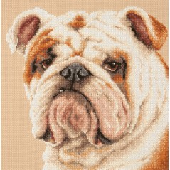 Cross Stitch Kit Bulldog art. 59-21