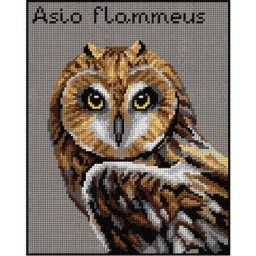 TAPESTRY CANVAS Short-Eared Owl 24X30cm 3017H