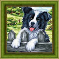 DIAMOND PAINTING KIT BORDER COLLIE AZ-1609