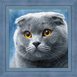 DIAMOND PAINTING KIT CAT AZ-1619
