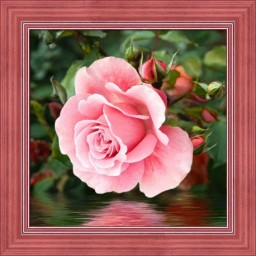 DIAMOND PAINTING KIT ROSE BY THE WATER AZ-1704 Pre-order only