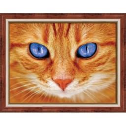 DIAMOND PAINTING KIT BLUE-EYED CAT AZ-1716 Pre-order only