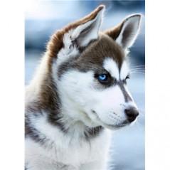 DIAMOND PAINTING KIT SNOW DOG WD088