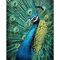 DIAMOND PAINTING KIT PEACOCK WD231
