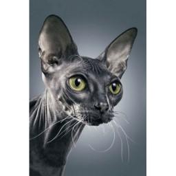 DIAMOND PAINTING KIT DARK SPHINX CAT WD2322