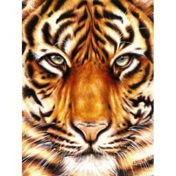 DIAMOND PAINTING KIT TIGER LOOK WD2360