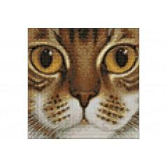 DIAMOND PAINTING KIT COPPER-EYED CAT WD2377
