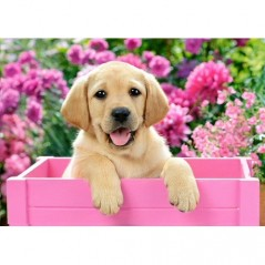 DIAMOND PAINTING KIT LABRADOR PUPPY IN PINK BOX WD2414