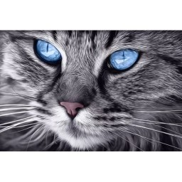 DIAMOND PAINTING KIT BLUE-EYED CAT WD2517