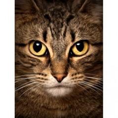 DIAMOND PAINTING KIT WISE CAT WD280