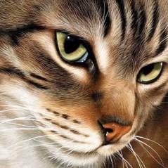 DIAMOND PAINTING KIT MYSTERIOUS CAT WD282