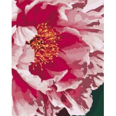 PAINT BY NUMBERS KIT Peony 40 x 50 cm КНО3039 Framed